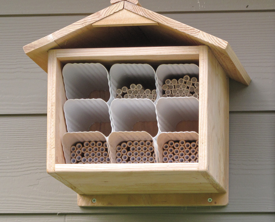 How to Get Rid of Mosquitos for Traditional Spaces with Mason Bees