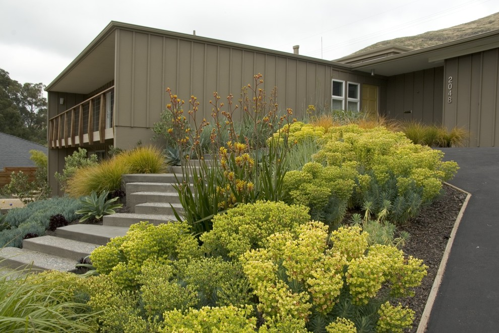 Kangaroo Paw Plant for Midcentury Exterior with Balcony