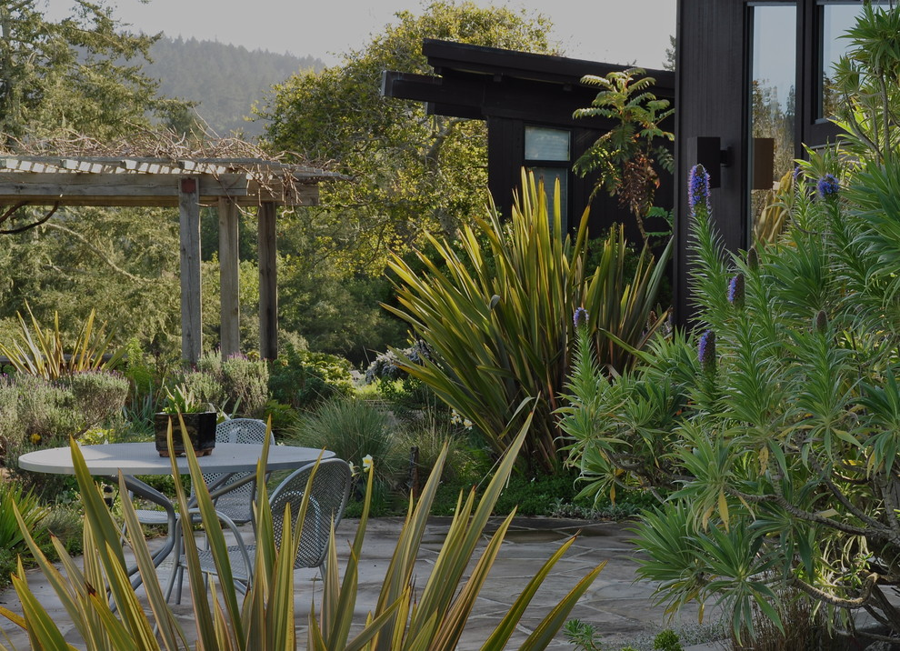Phormium for Traditional Landscape with Pride of Madeira