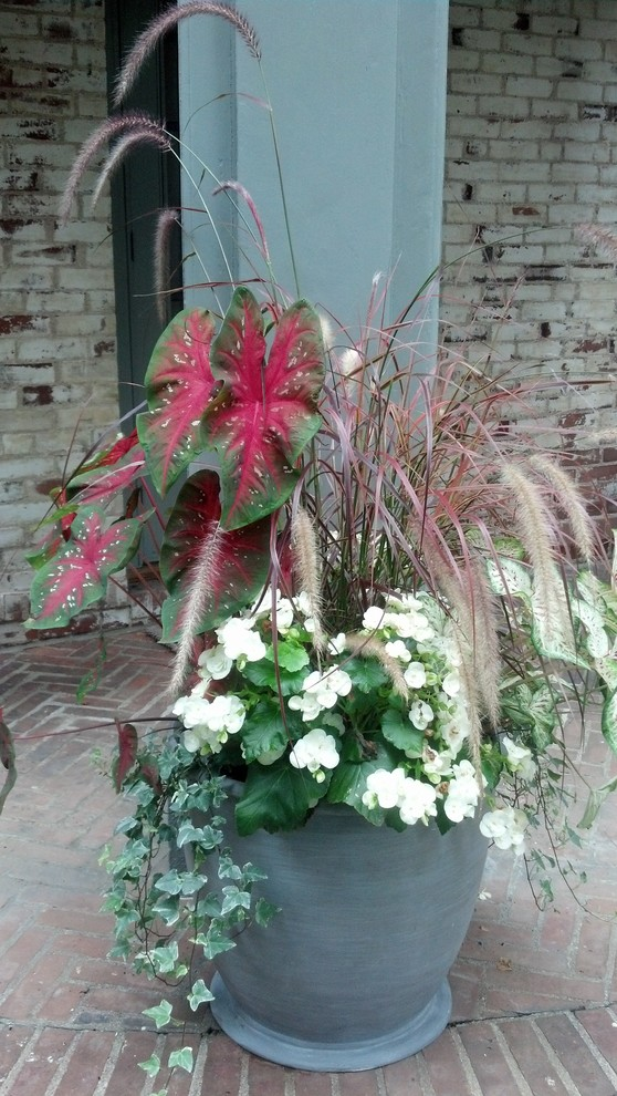 Rieger Begonia for Traditional Patio with Begonia