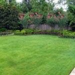 Canopy Houston for Mediterranean Landscape with Turf