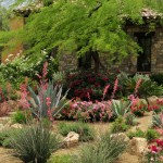Chip N Dales for Mediterranean Landscape with Succulents