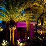 Chip N Dales for Tropical Landscape with Las Vegas