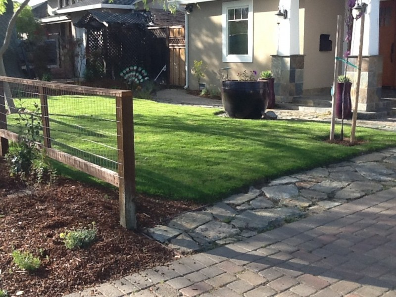 Delta Bluegrass for Contemporary Spaces with Delta Bluegrass Native Sod