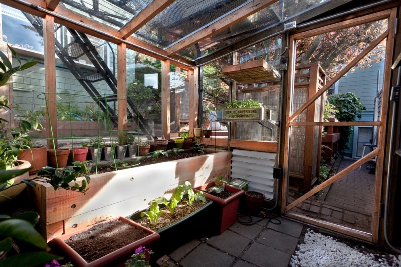 Growing Swiss Chard for Contemporary Shed with Cedar Planter