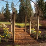 Hop Trellis for Traditional Landscape with Arbor