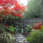 Japanica for Asian Landscape with River Pebbles