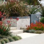 Kangaroo Paw Plant for Contemporary Landscape with Front Garden