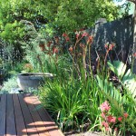 Kangaroo Paw Plant for Eclectic Landscape with Planting Bed