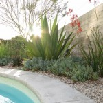 Kangaroo Paw Plant for Modern Landscape with Board Formed Concrete Wall