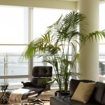 Lowes Palm Desert for Contemporary Living Room with Window Treatments