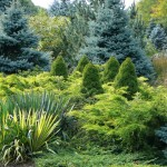 Lowes State College for Contemporary Landscape with Evergreen