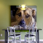 Midwest Homes for Pets for Modern Dining Room with White Baseboards