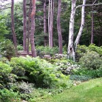 Minglewood for Eclectic Landscape with Evergreen