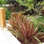 Phormium for Contemporary Landscape with Grass