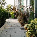 Phormium for Contemporary Landscape with Planter