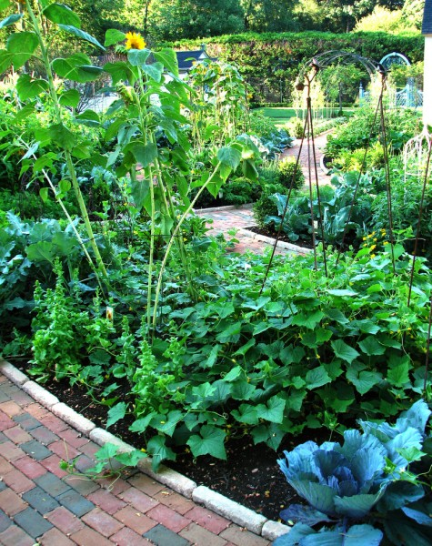 Potager Garden for Traditional Landscape with Traditional