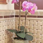 Princeton Nj Weather for Eclectic Bathroom with Nj Belle Mead