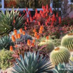 Waterwise Botanicals for Modern Landscape with Agave