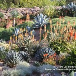 Waterwise Botanicals for Modern Landscape with Cactus
