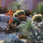 Waterwise Botanicals for Modern Landscape with Landscape