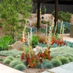 Xeriscape for Contemporary Landscape with Low Water