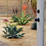 Xeriscape for Southwestern Landscape with Dracenae